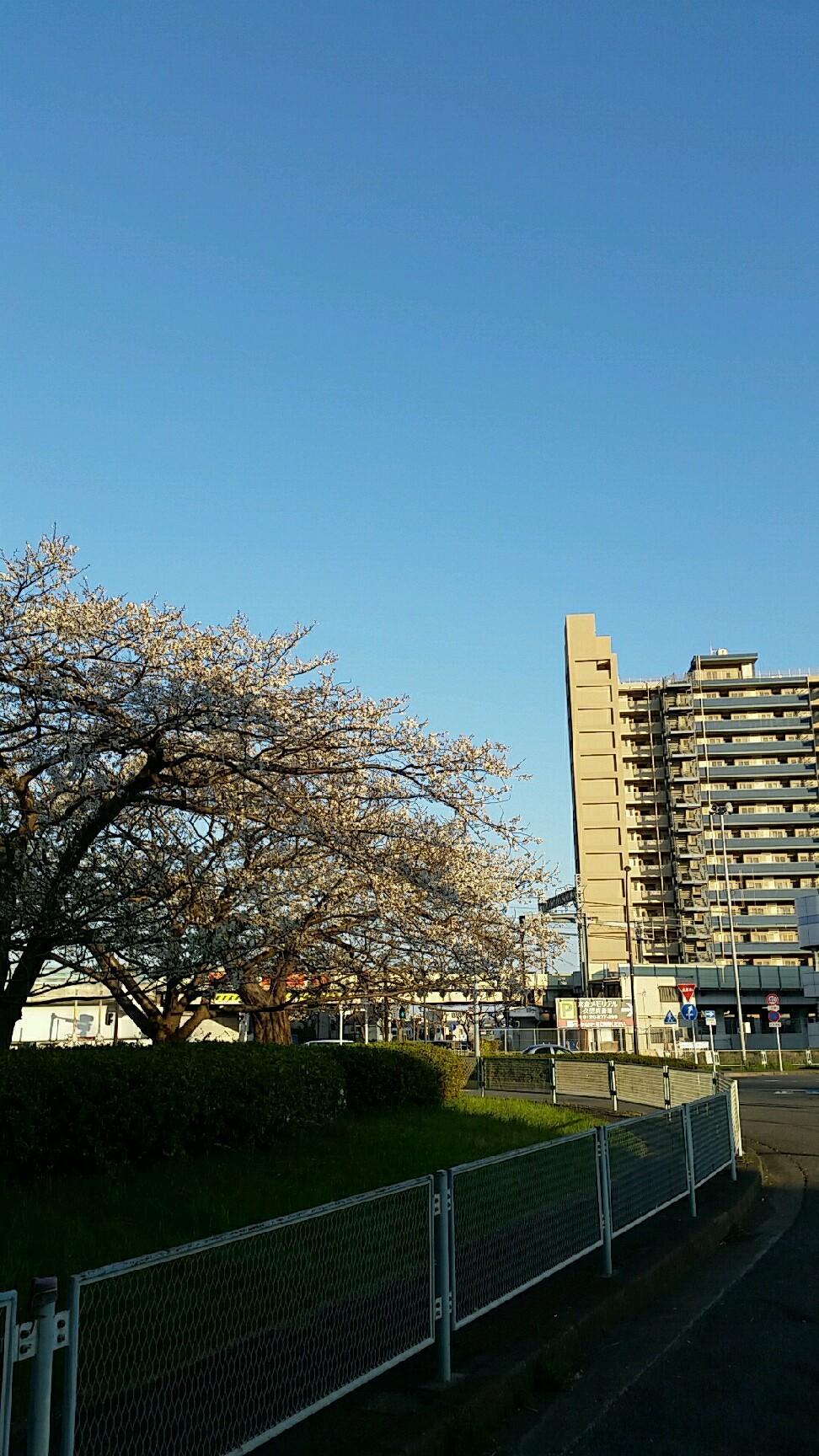 桜がキレイです。なん..._d0092901_23005937.jpg