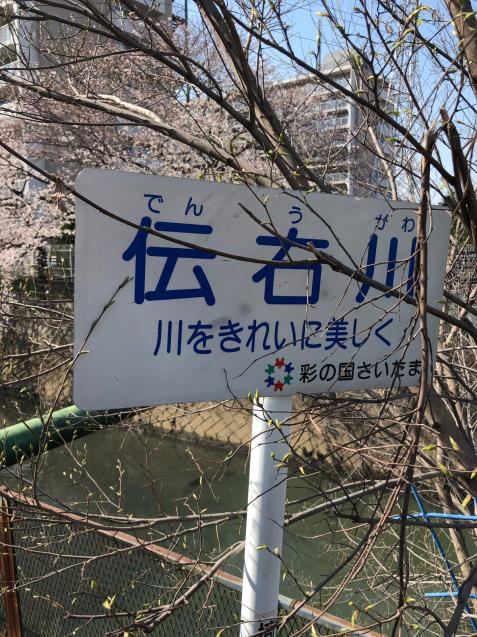 草加の桜花見_f0144003_11365303.jpg
