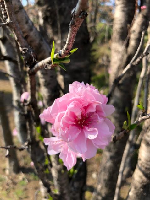 草加の桜花見_f0144003_11380669.jpg