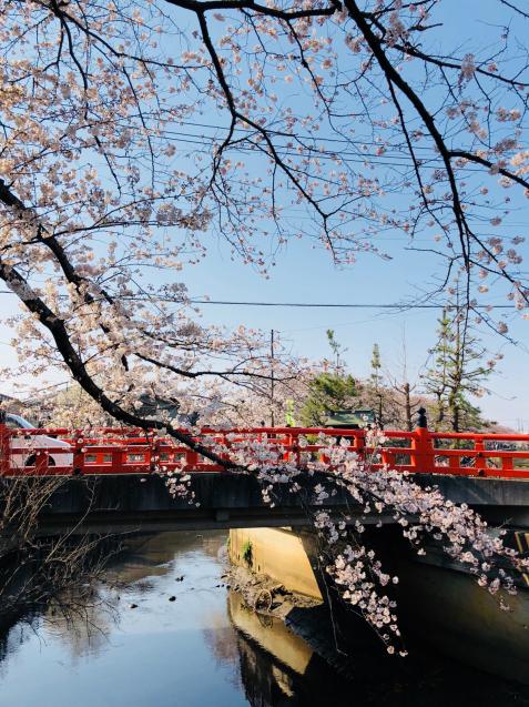 草加の桜花見_f0144003_11401514.jpg
