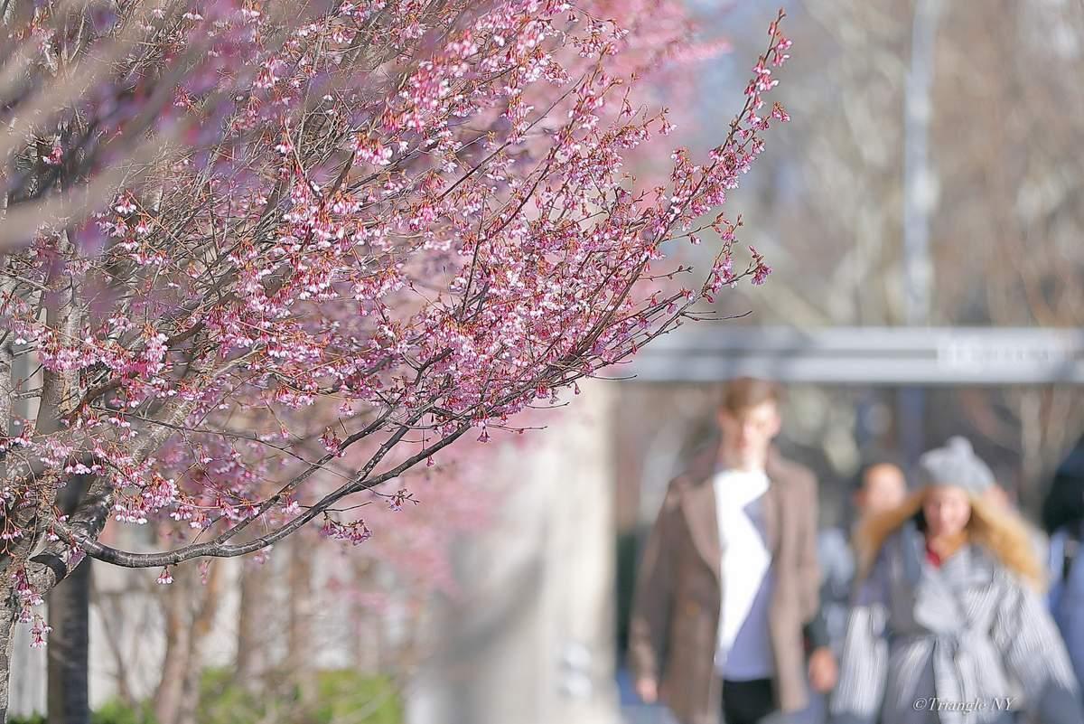 春はすぐそこまで_a0274805_06045678.jpg