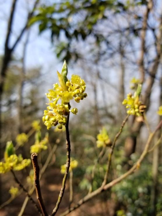 裏山の春_f0219710_19451008.jpg
