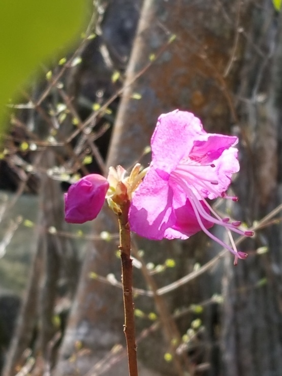 裏山の春_f0219710_19490252.jpg