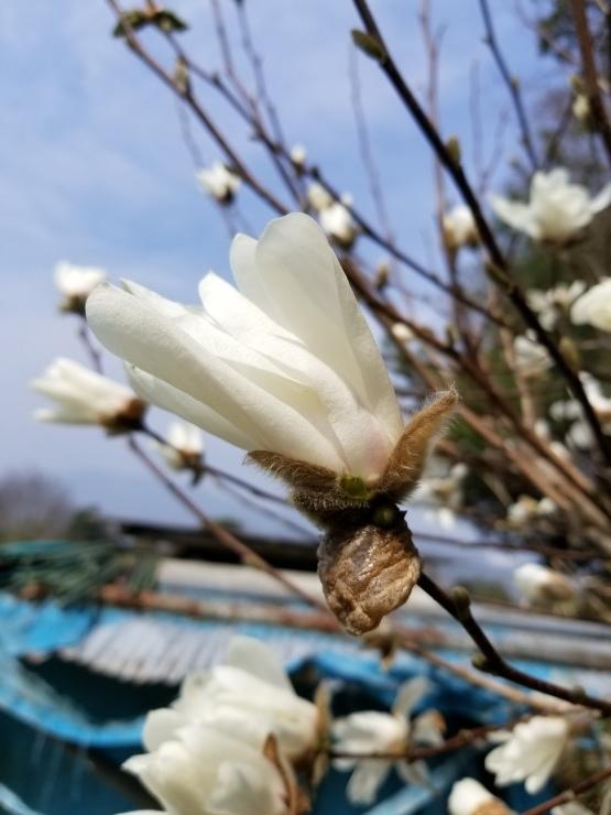裏山の春_f0219710_19523046.jpg