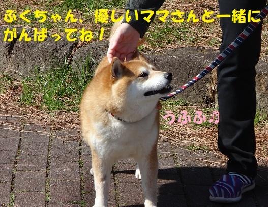 f0121712_00255745.jpg