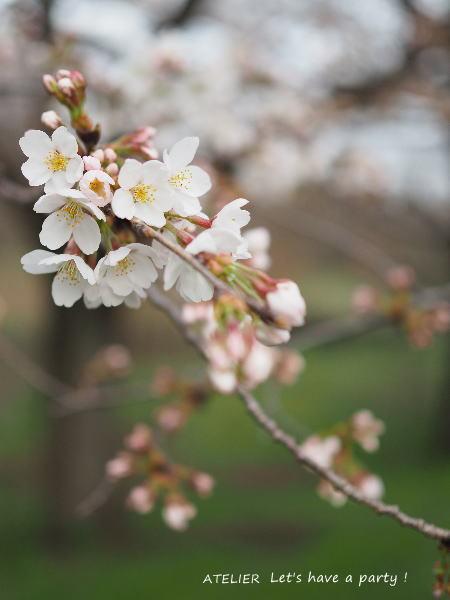 花より団子のお花見でした♪_c0082921_14184117.jpg
