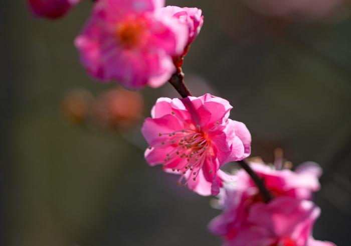 福島市渡利 「花見山の花」 ③_d0106628_10332145.jpg
