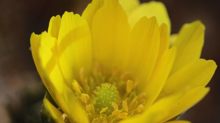 福島市渡利 「花見山の花」 ③_d0106628_10344988.jpg