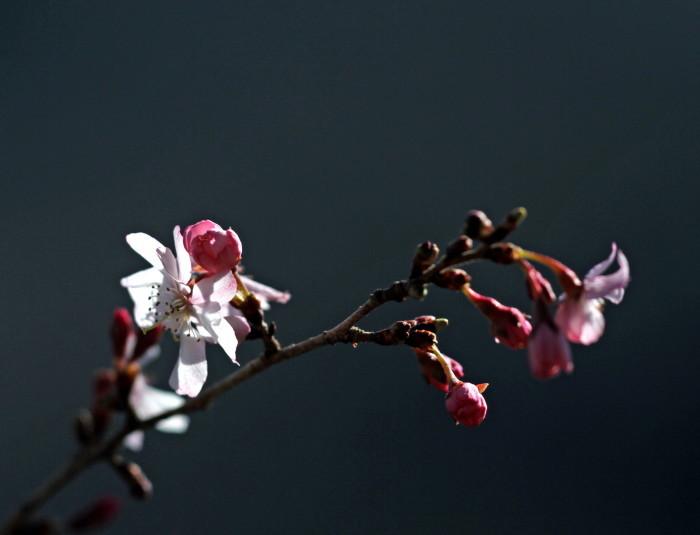 福島市渡利 「花見山の花」 ③_d0106628_18092797.jpg