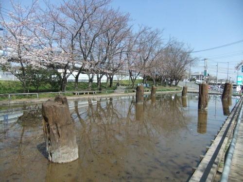 桜~桜...満開寸前..._b0137932_14435783.jpg