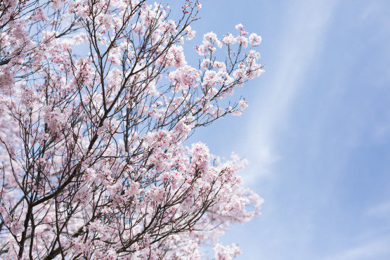 お花見日和_d0375837_18153027.jpg