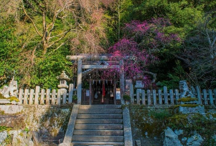 大豊神社の紅梅、椿、蝋梅_e0363038_13202763.jpg