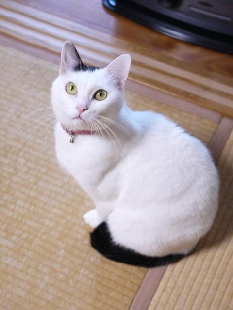 猫のお留守番 たらくん編。_a0143140_23435176.jpg