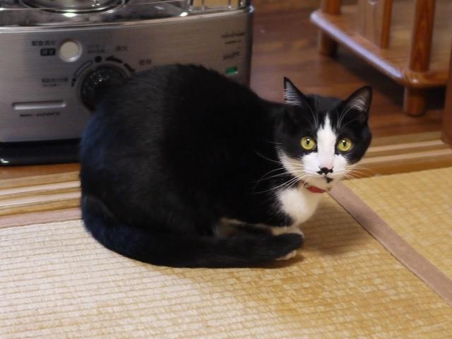 猫のお留守番 にこくん編。_a0143140_23570051.jpg