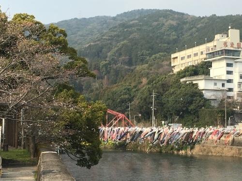 今月は、もうラスト‼️   桜 桜 桜〜‼️_b0346442_18370083.jpeg