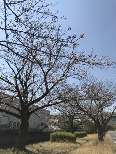 温かい気持ちに包まれた桜_b0307951_00054817.jpg