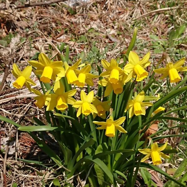 🌸春をさがして🌻_e0020051_09502310.jpg