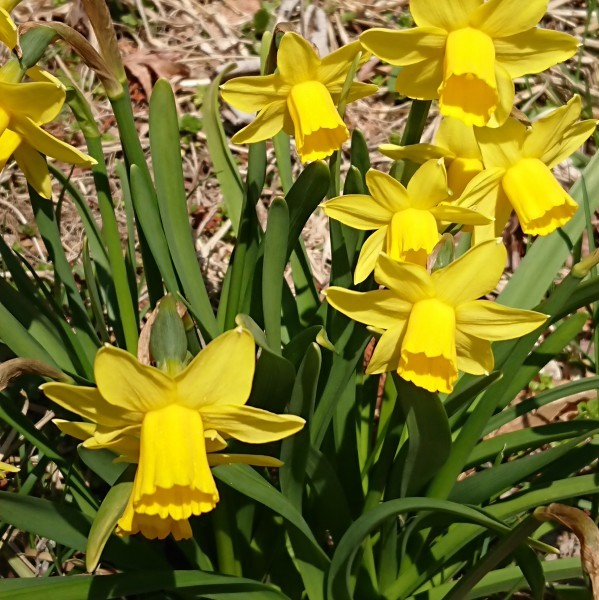 🌸春をさがして🌻_e0020051_09505860.jpg