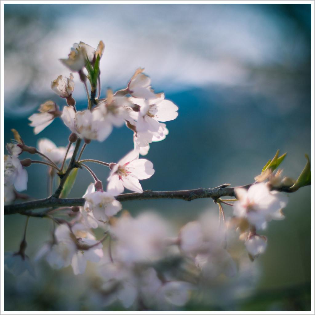 急に春になったねえ_d0104052_17035613.jpg