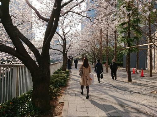 今朝の目黒川の桜♪_c0100865_08033980.jpg