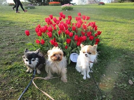 お花見です_d0006467_23065520.jpg
