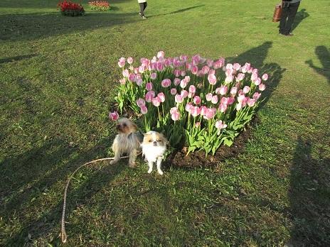 お花見です_d0006467_23071403.jpg