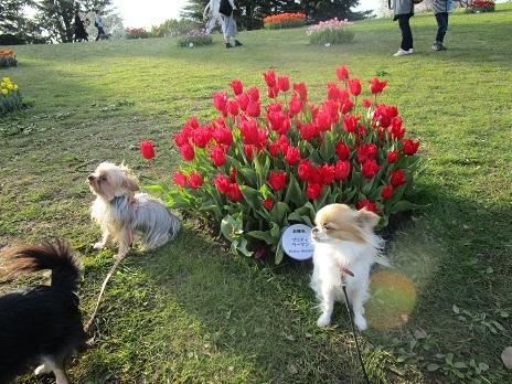 お花見です_d0006467_23074603.jpg