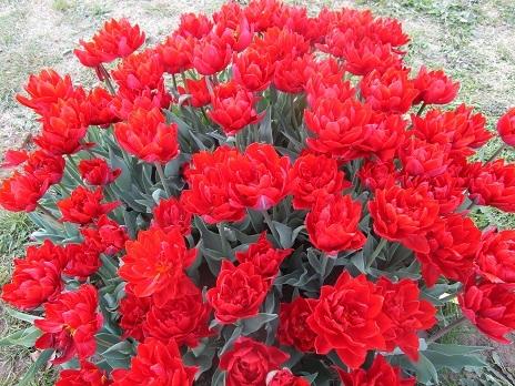 お花見です_d0006467_23125659.jpg