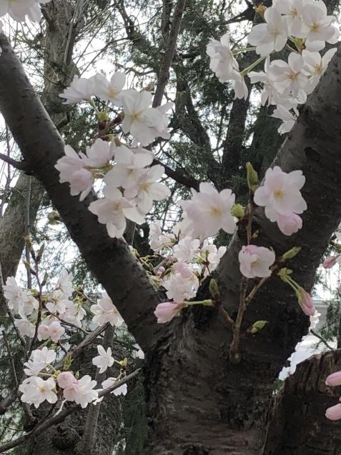 コニーちゃんのお泊り(26日)_e0367571_12002560.jpg