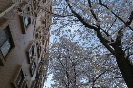 今日は仲良くお花見でした_e0292172_20061857.jpg