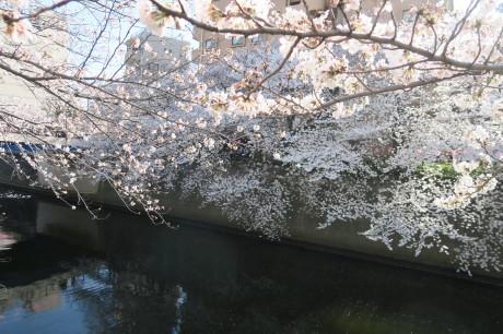 今日は仲良くお花見でした_e0292172_20075081.jpg