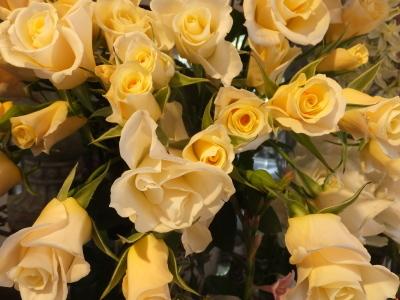 オークリーフ(春のマノン)_f0049672_17255867.jpg