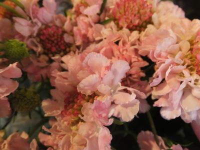 オークリーフ(春のマノン)_f0049672_17320618.jpg
