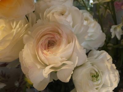 オークリーフ(春のマノン)_f0049672_17322507.jpg