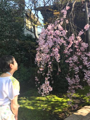 花の命は短くて苦しきことのみ多かりき _e0326573_15463682.jpg
