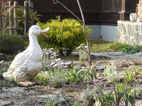 今のお庭_e0365880_22102068.jpg