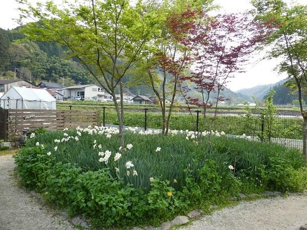 今のお庭_e0365880_22141260.jpg