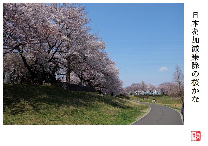 日本を加減乗除の桜かな_a0248481_21140625.jpg