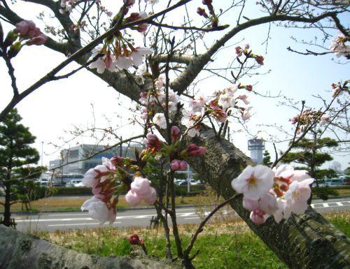 佐賀空港にて_b0170184_16480878.jpg