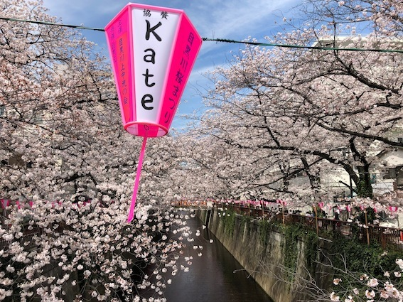 目黒川の桜_f0230689_20373293.jpeg