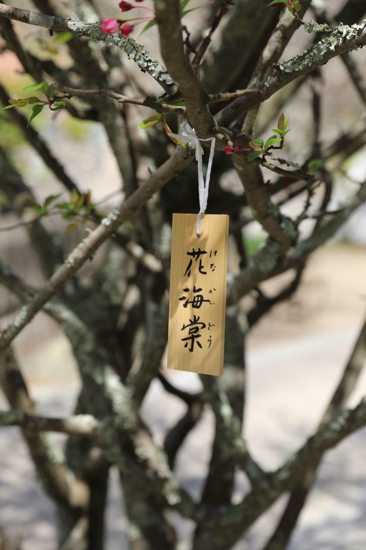 桜の季節_b0275998_15501774.jpg