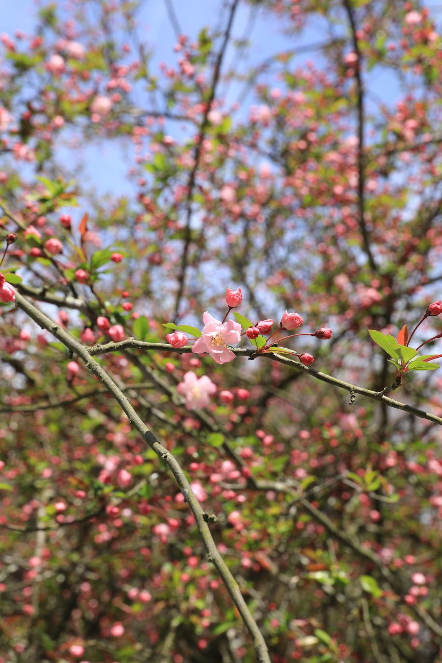 桜の季節_b0275998_15502499.jpg