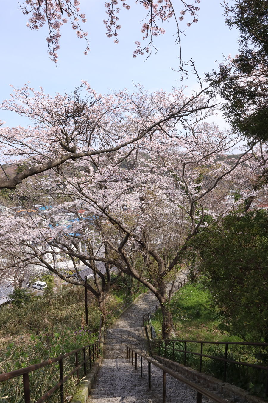 桜の季節_b0275998_16032363.jpg