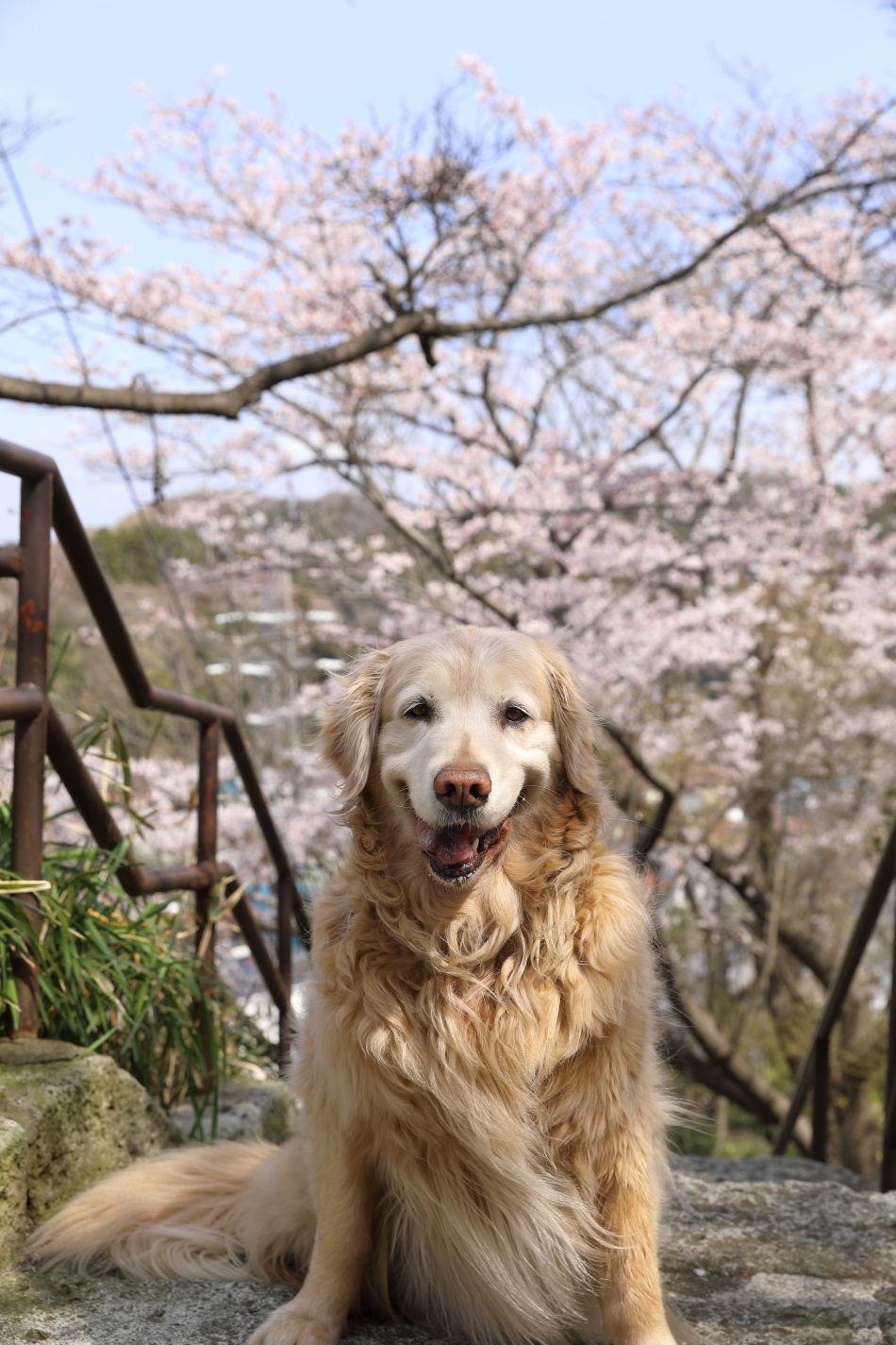 桜の季節_b0275998_16034284.jpg