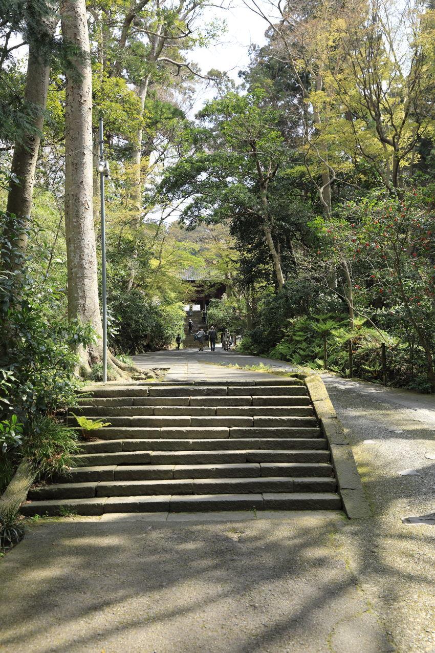 桜の季節_b0275998_16253592.jpg