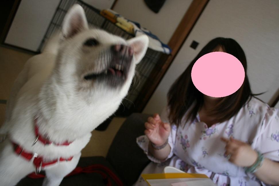 糀ちゃん 新生活スタート!_f0242002_21071639.jpg