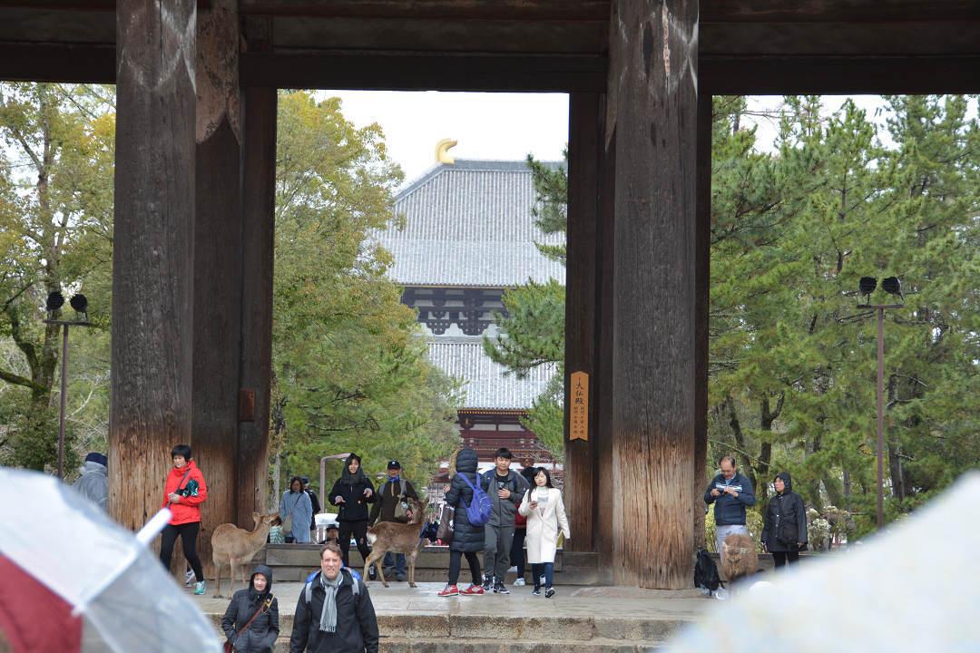 京都を歩く(11)奈良公園と東大寺_a0148206_06335756.jpg
