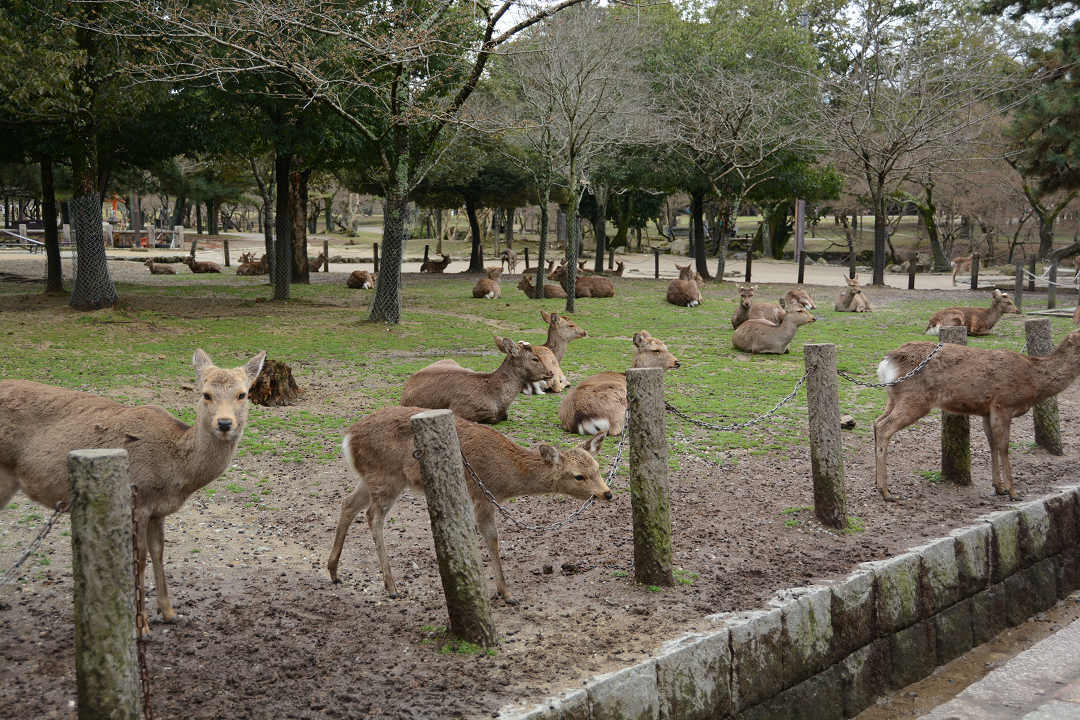 京都を歩く(11)奈良公園と東大寺_a0148206_06372256.jpg