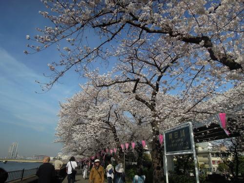 隅田川 堤堤公園 散策のお花見_e0116211_11075708.jpg