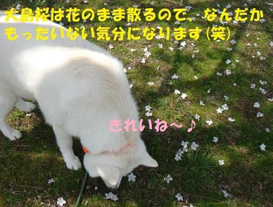 f0121712_14270284.jpg